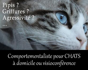 Comportementaliste pour chat sur place ou en visio